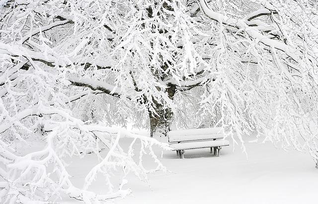 zasněžený strom a lavička
